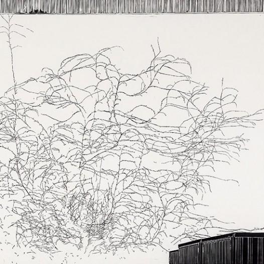 Stadtpflanze, 2016, Linolschnitt, 120 x 175 cm, Edition 1/5 + 2