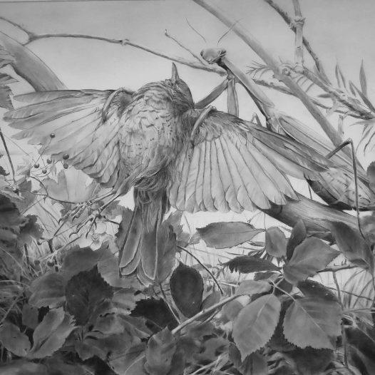 o.T., 2018, 82 x 143,5 cm, Kohle auf Papier