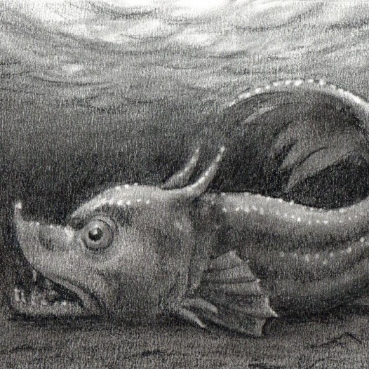 O.T. (barocker Fisch), 2018, Kohle auf Papier, 14,5 x 21 cm