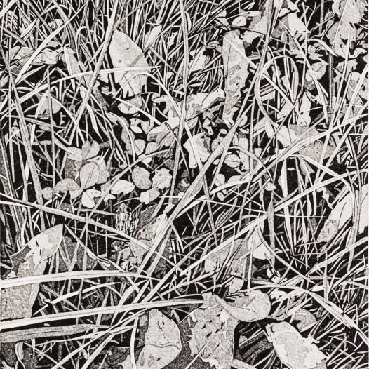 Frosch, 2020, Linolschnitt, Reduktion, 5 Farben, Auflage: 30, Druck: 22 x 17 cm, Papier: 30 x 24 cm
