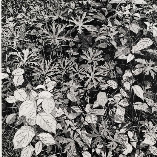 Weide, 2020, Linolschnitt, Reduktion, 6 Farben,  Auflage: 12, Druck: 55 x 41,3 cm, Papier: 69 x 53 cm